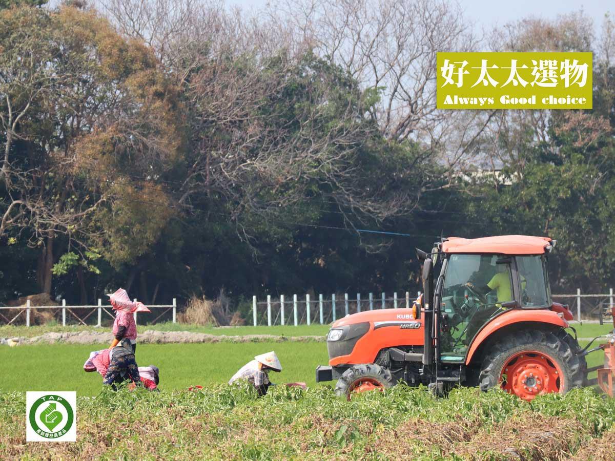 ▲ 由斗南農會輔導,每一顆都有安心的「TAP認證」喔!