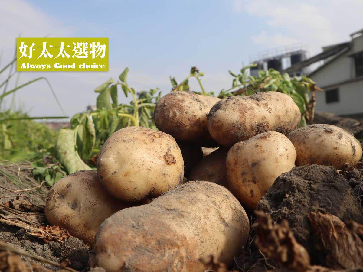 ▲我們的馬鈴薯有「產銷履歷認證」,讓您吃的很安心。